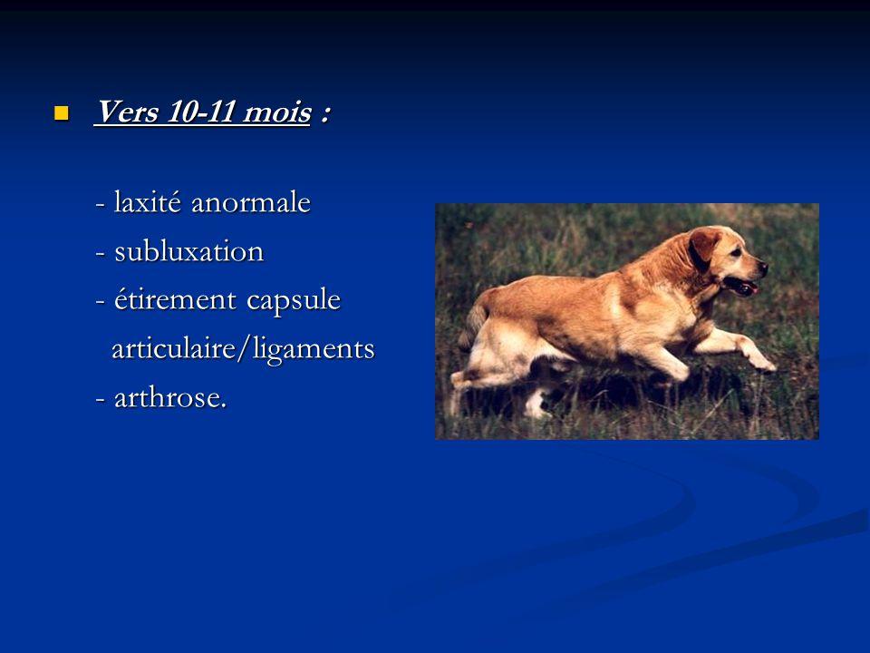 Vers 10-11 mois : - laxité anormale. - subluxation. - étirement capsule. articulaire/ligaments.