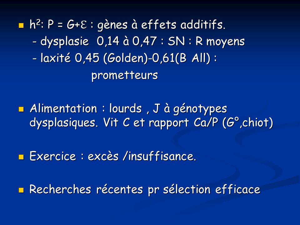 h2: P = G+ℇ : gènes à effets additifs.