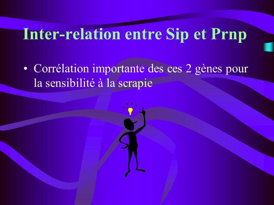 Inter-relation entre Sip et Prnp