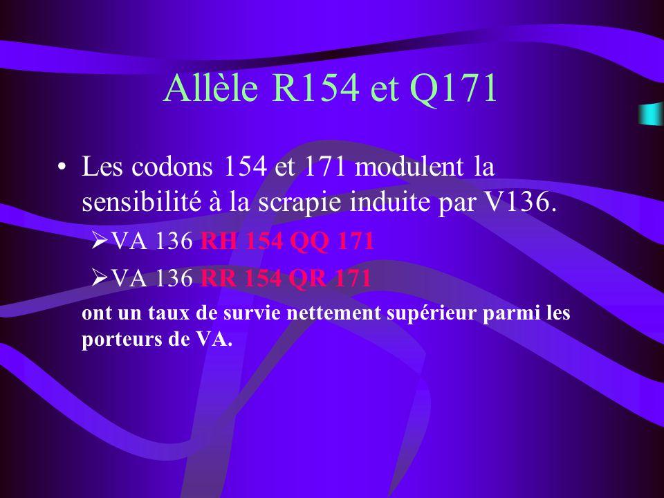 Allèle R154 et Q171 Les codons 154 et 171 modulent la sensibilité à la scrapie induite par V136. VA 136 RH 154 QQ 171.