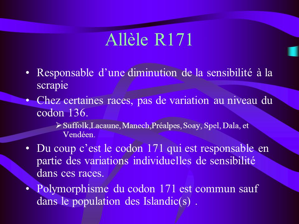 Allèle R171 Responsable d'une diminution de la sensibilité à la scrapie. Chez certaines races, pas de variation au niveau du codon 136.