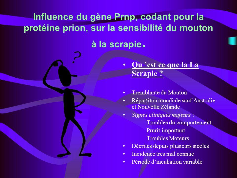 Influence du gène Prnp, codant pour la protéine prion, sur la sensibilité du mouton à la scrapie.