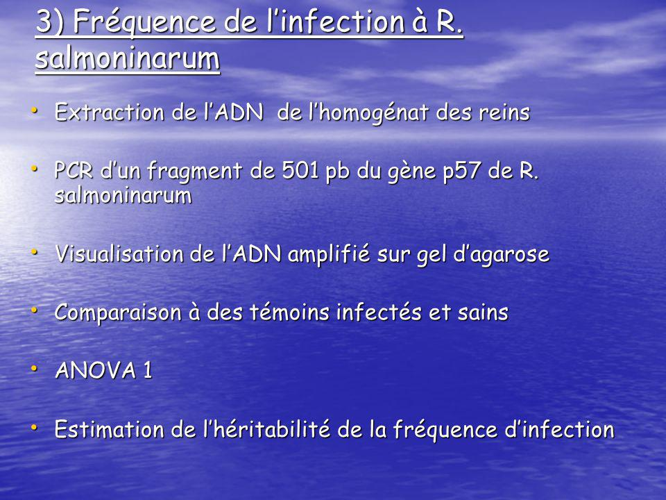 3) Fréquence de l'infection à R. salmoninarum