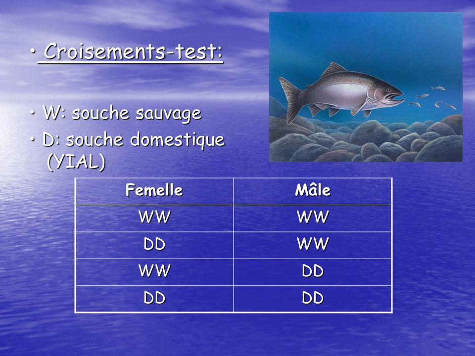 Croisements-test: • W: souche sauvage • D: souche domestique (YIAL)
