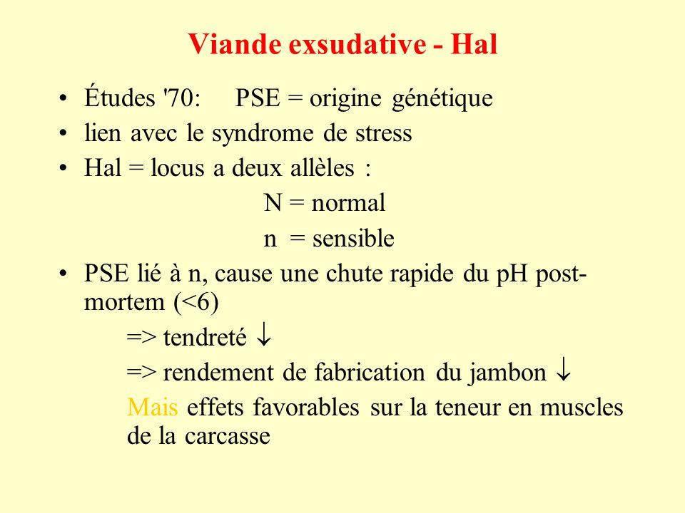 Viande exsudative - Hal