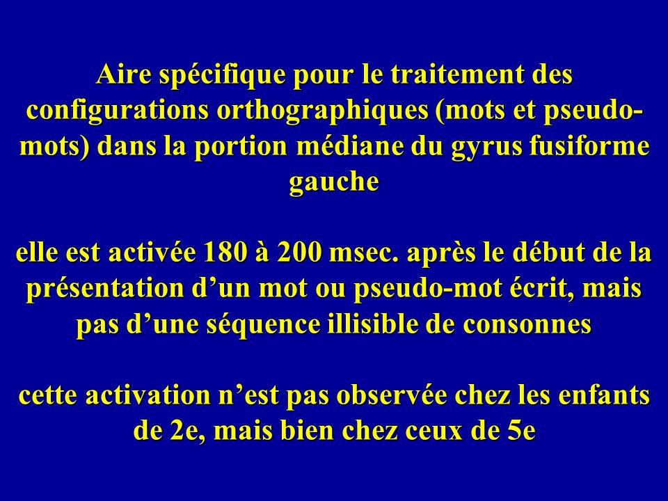 Aire spécifique pour le traitement des configurations orthographiques (mots et pseudo-mots) dans la portion médiane du gyrus fusiforme gauche elle est activée 180 à 200 msec.