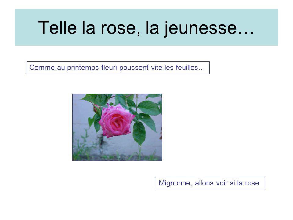 Telle la rose, la jeunesse…