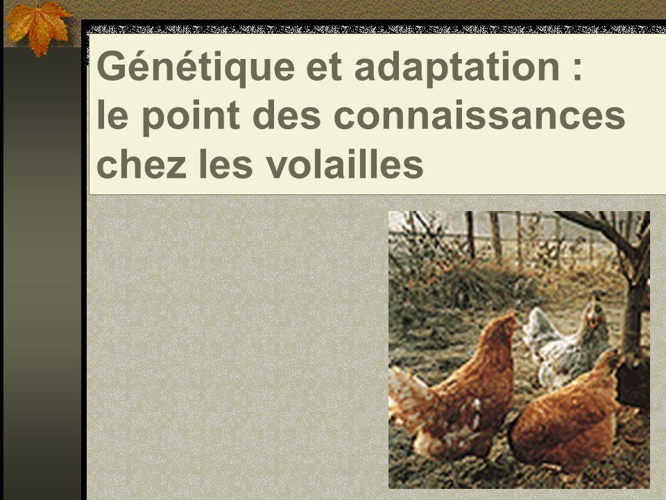 Génétique et adaptation : le point des connaissances chez les volailles