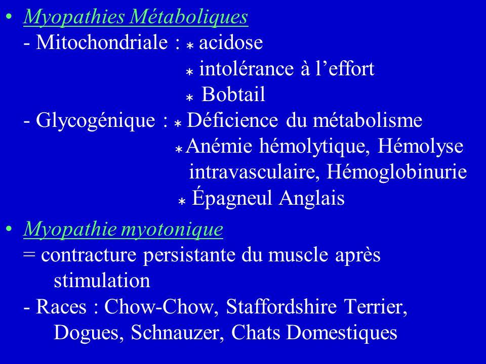 Myopathies Métaboliques - Mitochondriale :  acidose  intolérance à l'effort  Bobtail - Glycogénique :  Déficience du métabolisme  Anémie hémolytique, Hémolyse intravasculaire, Hémoglobinurie  Épagneul Anglais