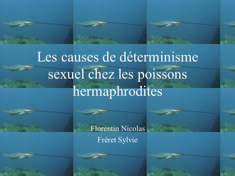 Les causes de déterminisme sexuel chez les poissons hermaphrodites