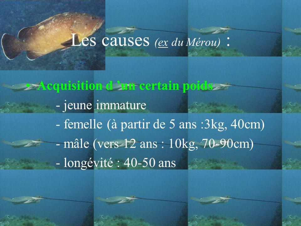 Les causes (ex du Mérou) :