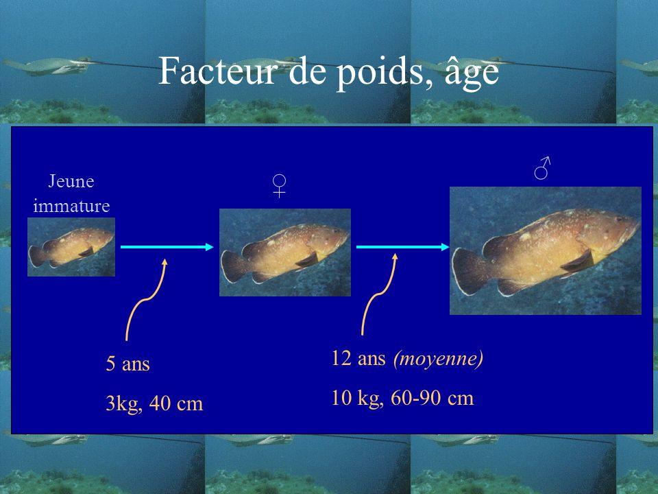 Facteur de poids, âge ♂ ♀ 12 ans (moyenne) 5 ans 10 kg, 60-90 cm