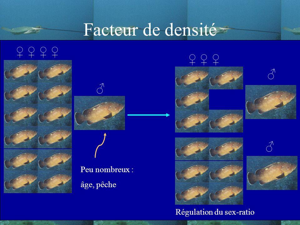 Facteur de densité ♀ ♀ ♀ ♀ ♀ ♀ ♀ ♂ Peu nombreux : âge, pêche