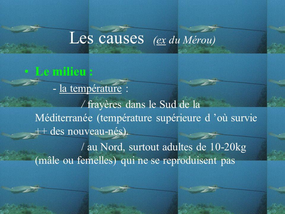 Les causes (ex du Mérou)