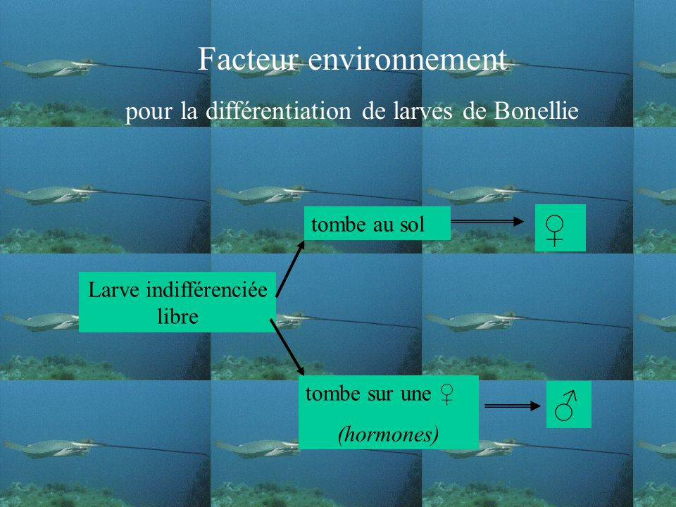 Facteur environnement