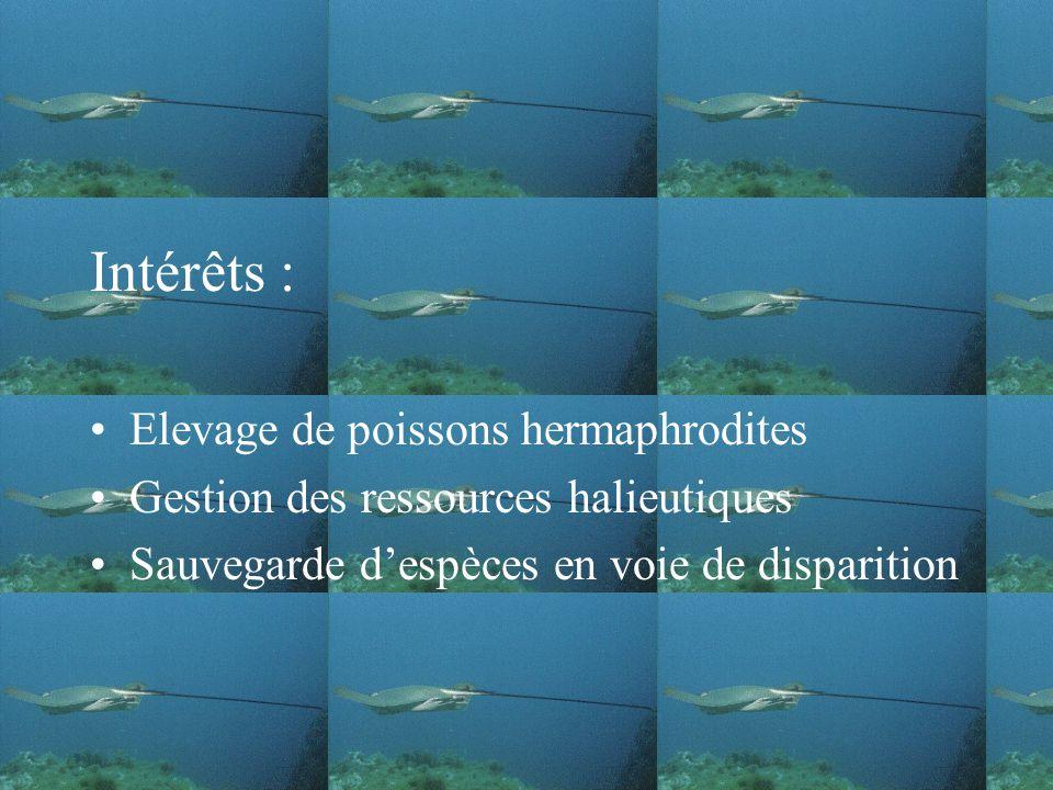 Intérêts : Elevage de poissons hermaphrodites
