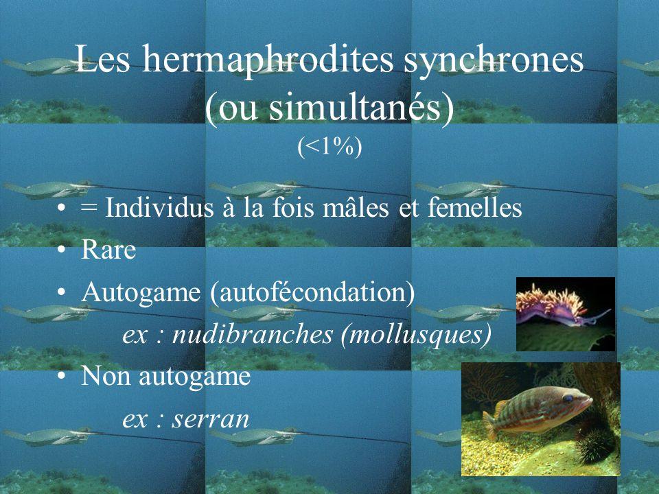 Les hermaphrodites synchrones (ou simultanés) (<1%)