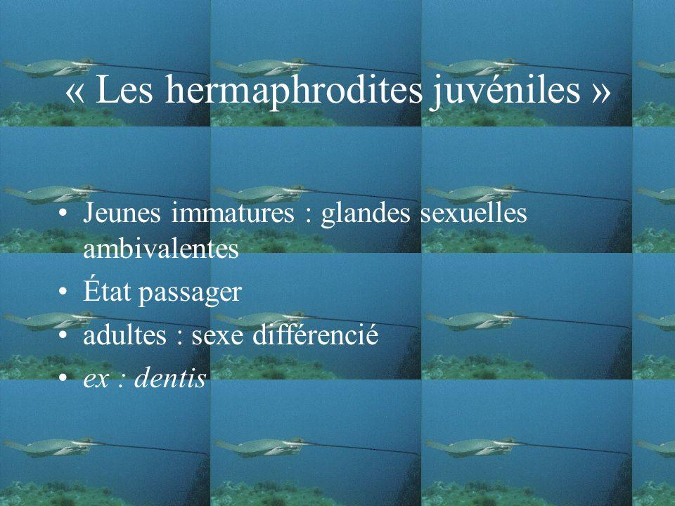 « Les hermaphrodites juvéniles »