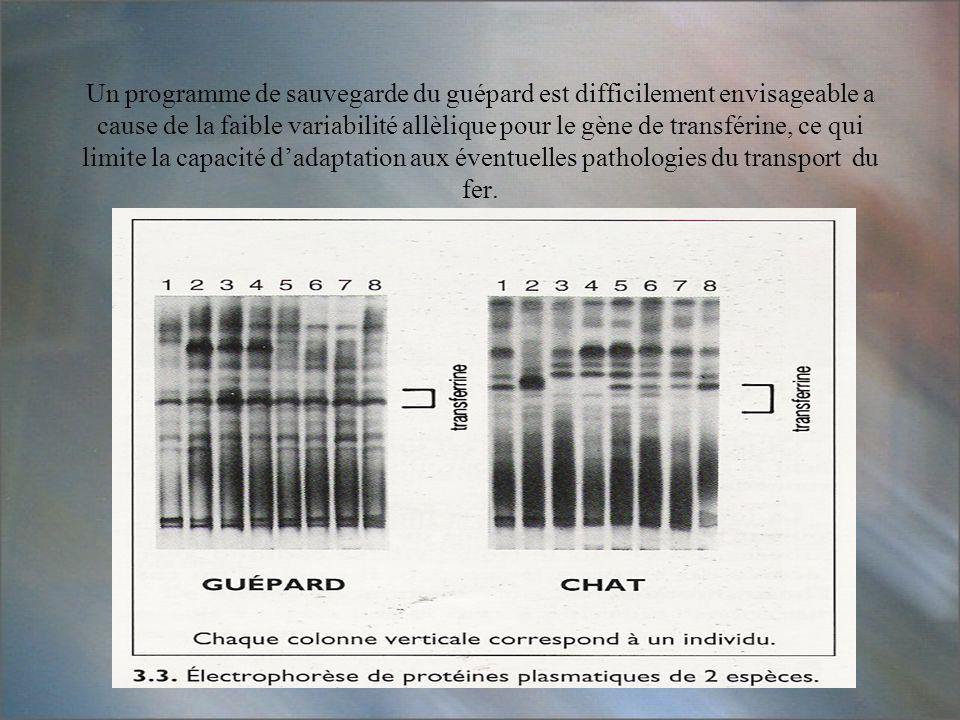 Un programme de sauvegarde du guépard est difficilement envisageable a cause de la faible variabilité allèlique pour le gène de transférine, ce qui limite la capacité d'adaptation aux éventuelles pathologies du transport du fer.