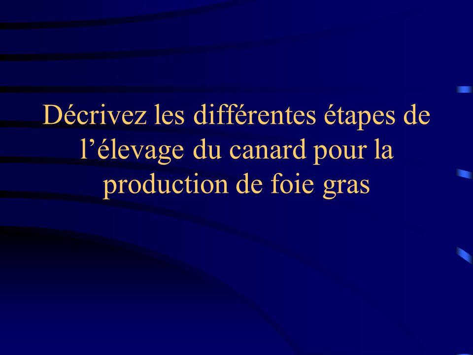 Décrivez les différentes étapes de l'élevage du canard pour la production de foie gras