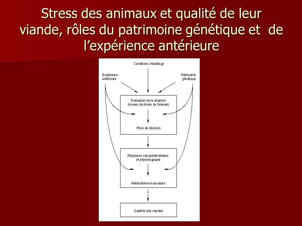 Stress des animaux et qualité de leur viande, rôles du patrimoine génétique et de l'expérience antérieure