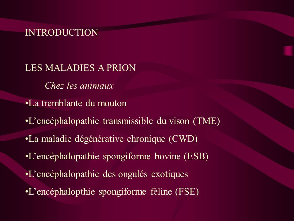INTRODUCTION LES MALADIES A PRION. Chez les animaux. La tremblante du mouton. L'encéphalopathie transmissible du vison (TME)