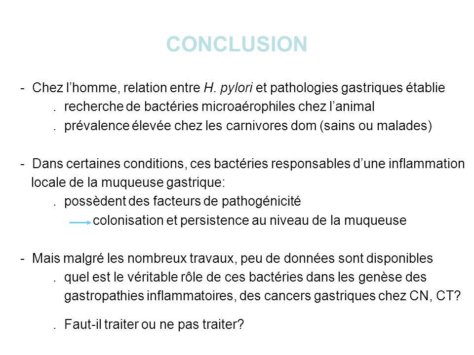 CONCLUSION - Chez l'homme, relation entre H. pylori et pathologies gastriques établie. . recherche de bactéries microaérophiles chez l'animal.