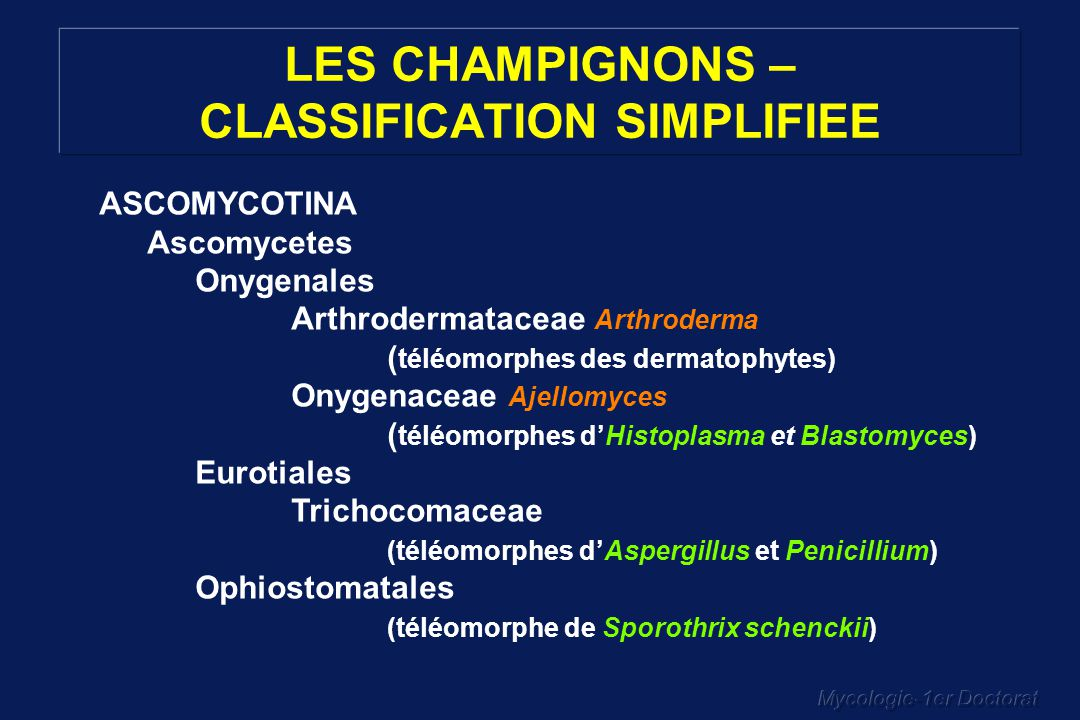 LES CHAMPIGNONS – CLASSIFICATION SIMPLIFIEE