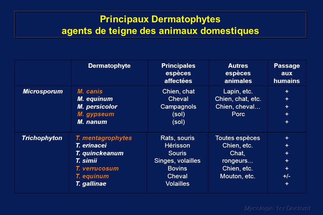 Principaux Dermatophytes agents de teigne des animaux domestiques