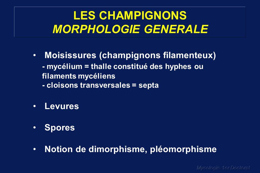 LES CHAMPIGNONS MORPHOLOGIE GENERALE