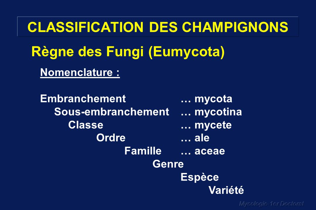 CLASSIFICATION DES CHAMPIGNONS