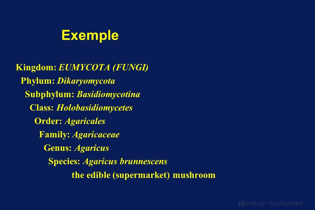 Mycologie-1er Doctorat
