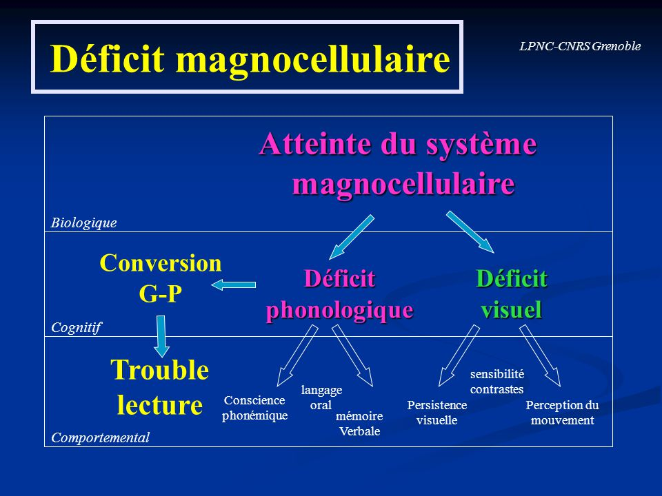 Déficit magnocellulaire