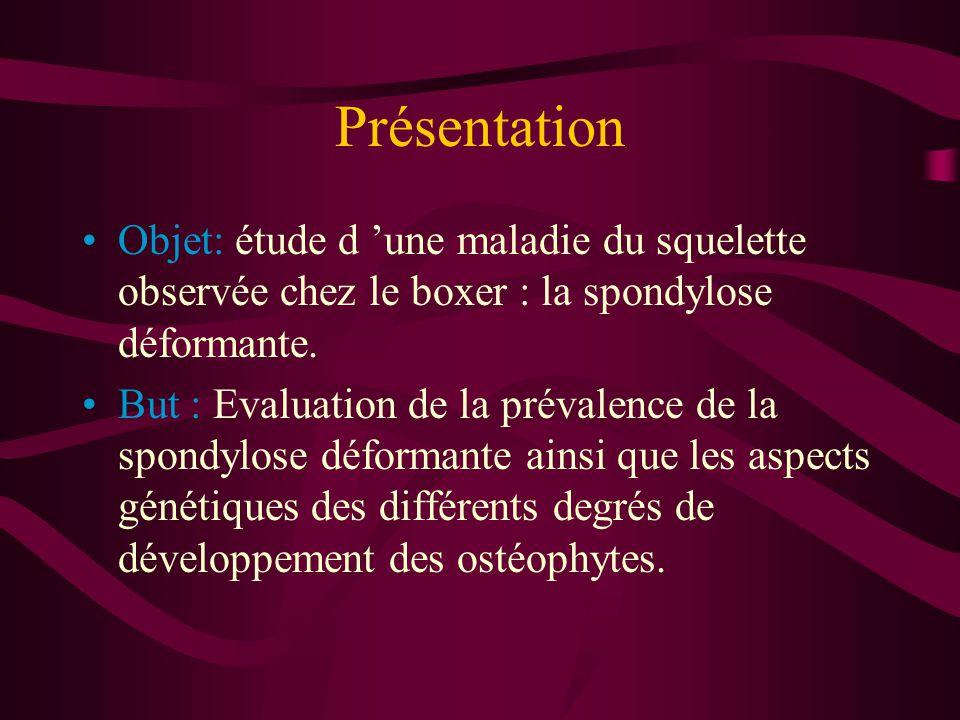 Présentation Objet: étude d 'une maladie du squelette observée chez le boxer : la spondylose déformante.