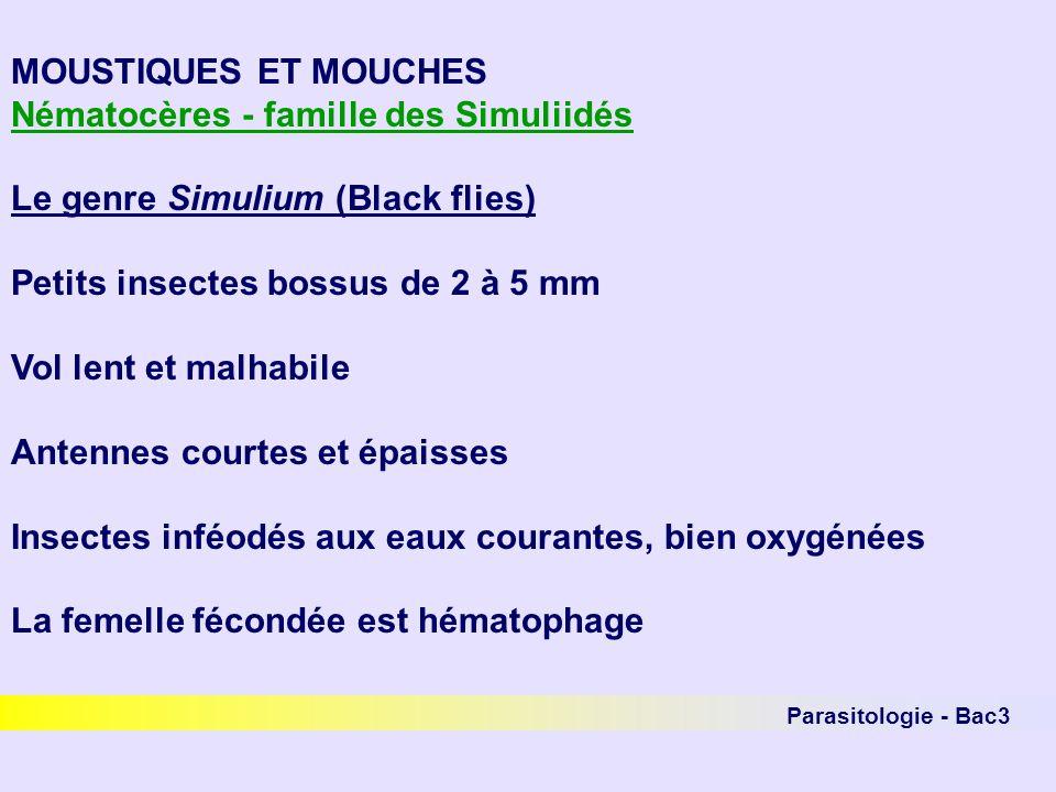 Nématocères - famille des Simuliidés Le genre Simulium (Black flies)
