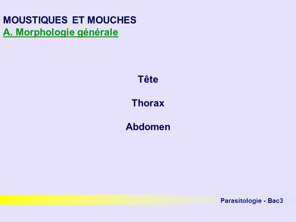 A. Morphologie générale