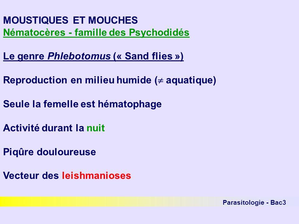 Nématocères - famille des Psychodidés