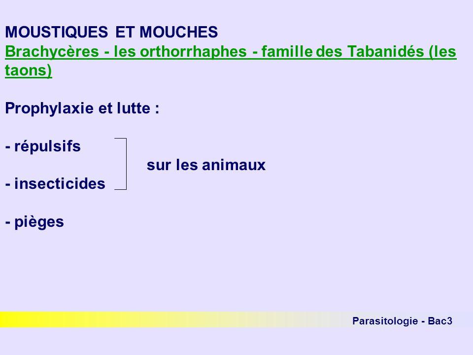 Brachycères - les orthorrhaphes - famille des Tabanidés (les taons)