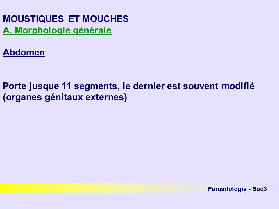 A. Morphologie générale Abdomen