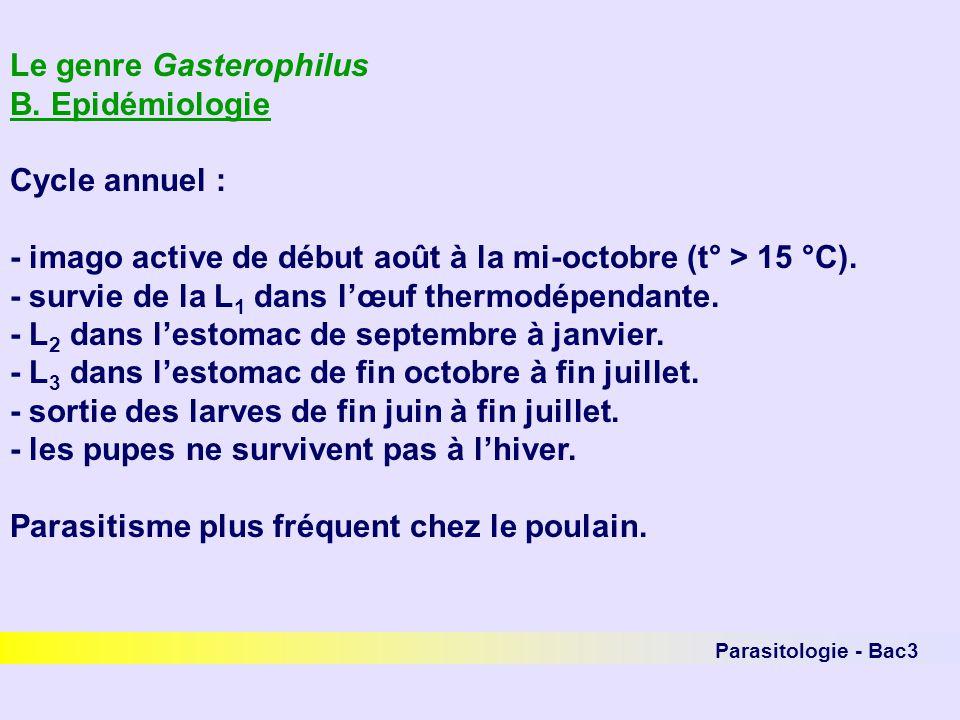 Le genre Gasterophilus B. Epidémiologie Cycle annuel :
