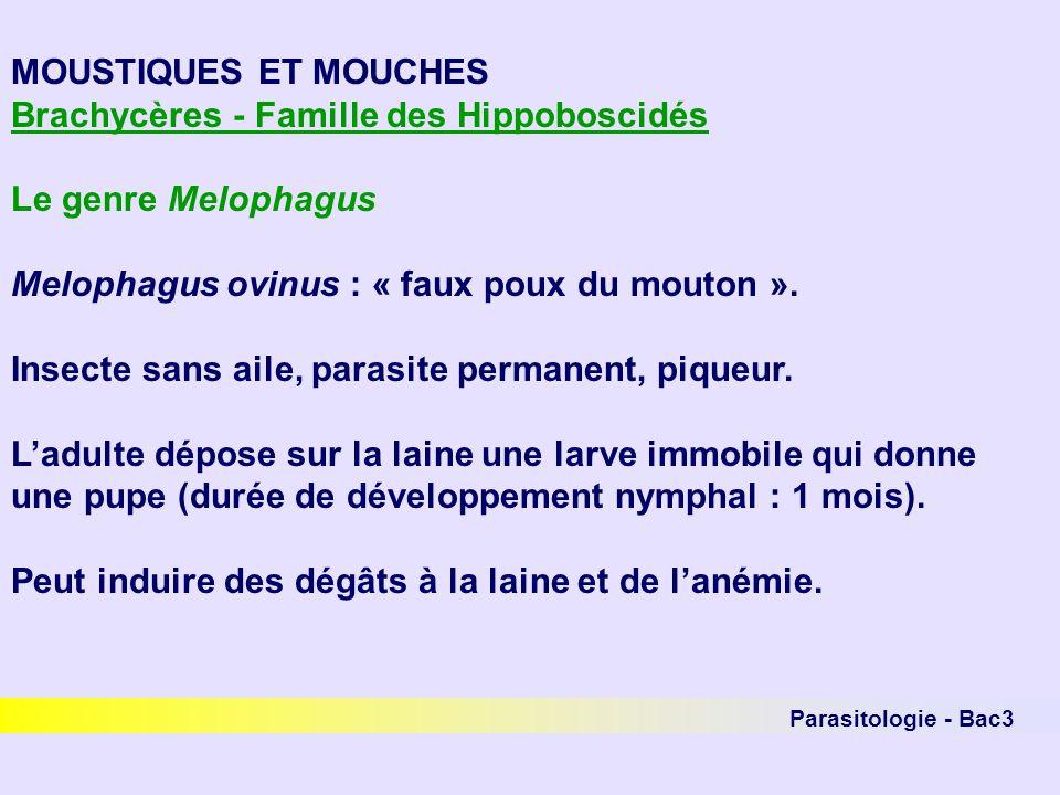 Brachycères - Famille des Hippoboscidés Le genre Melophagus