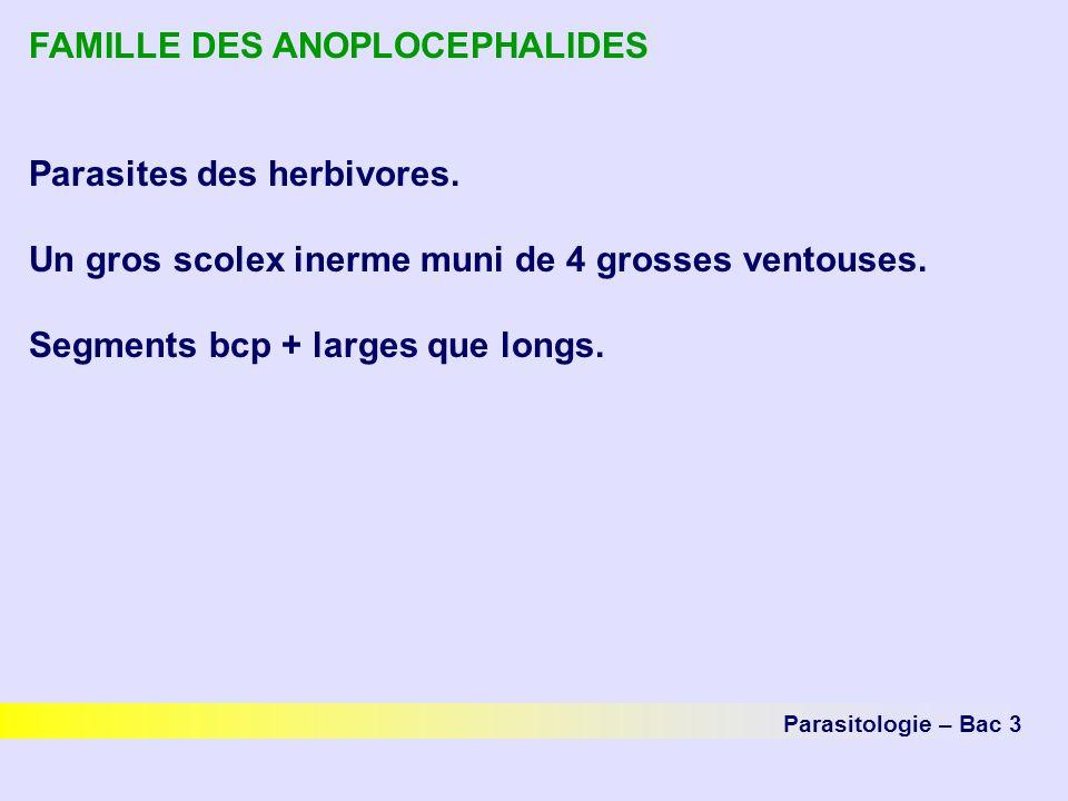 FAMILLE DES ANOPLOCEPHALIDES