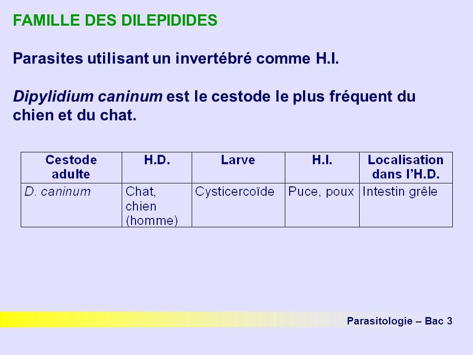 FAMILLE DES DILEPIDIDES Parasites utilisant un invertébré comme H.I.