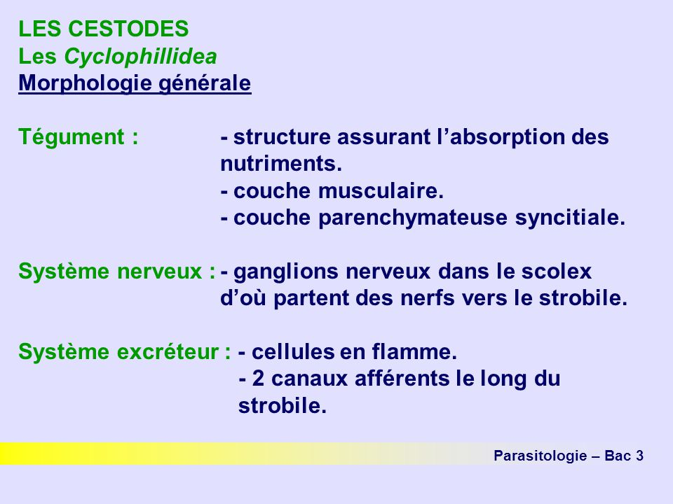 Tégument : - structure assurant l'absorption des nutriments.