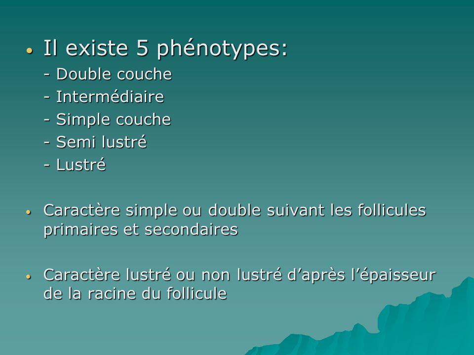 Il existe 5 phénotypes: - Double couche - Intermédiaire