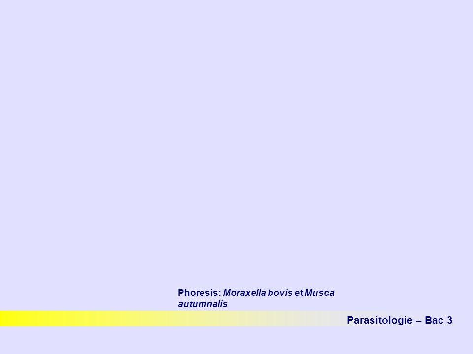 Phoresis: Moraxella bovis et Musca