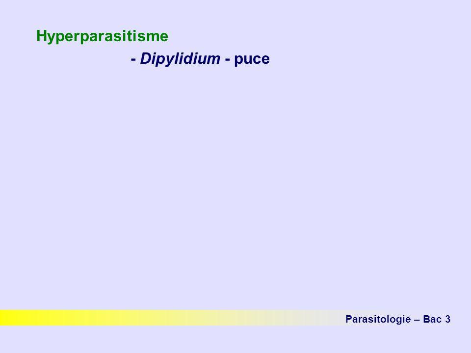 Hyperparasitisme - Dipylidium - puce