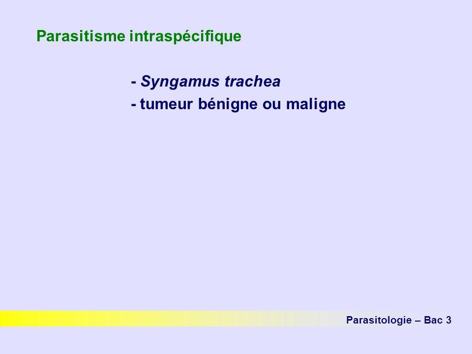 Parasitisme intraspécifique - Syngamus trachea