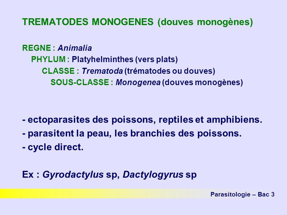 TREMATODES MONOGENES (douves monogènes)