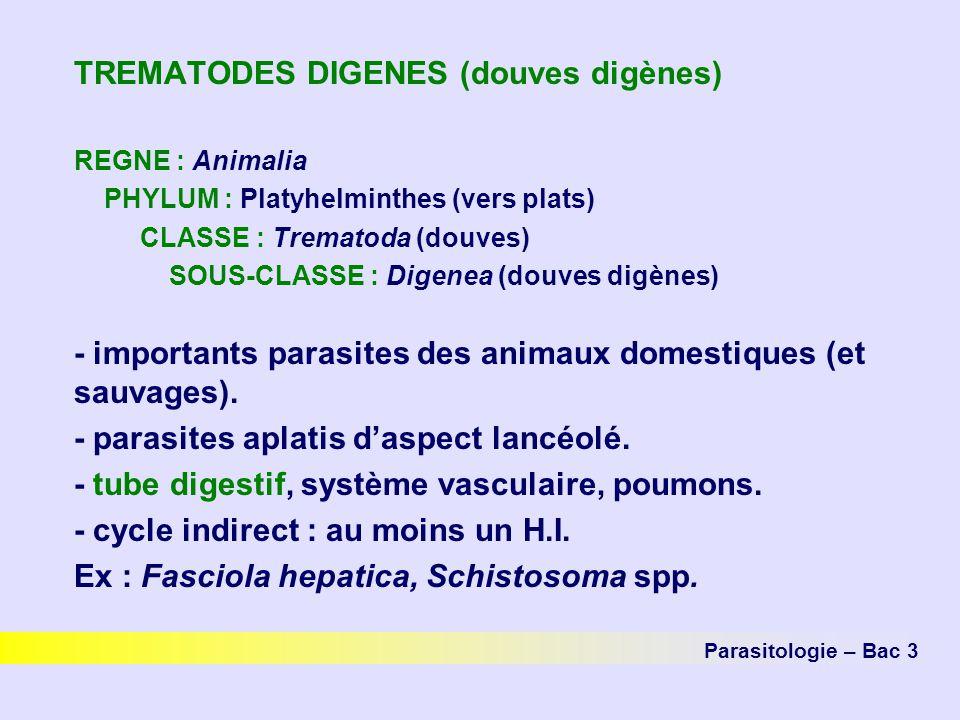 TREMATODES DIGENES (douves digènes)